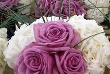 Norton's Weddings- Lavender and White / Bridal Bouquet, Bridesmaid bouquets, and Centerpieces