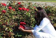 """Flores no Caminho / """"Eu sou aquela mulher que fez a escalada da montanha da vida, removendo pedras e plantando flores."""" Cora Coralina"""