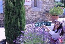 Provence, assim sou eu quando lá estou... / Uma Lavandula Vera