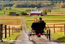 Amish / by Joy Lay