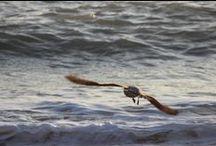 Fernão Capelo Gaivota - Richard Bach / Uma gaivota de nome Fernão decide que voar não deve ser apenas uma forma para a ave se movimentar. A história desenrola-se sobre o fascínio de Fernão pelas acrobacias que pode modificar e em como isso transtorna o grupo de gaivotas do seu clã. É uma história sobre liberdade, aprendizagem e amor.