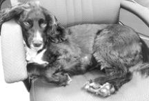 Alfie's Antics / Alfie is out office pooch, check out what he gets up to #officedog #dog