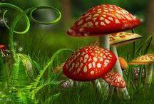 Fungi/ Mushrooms / by Joy Lay