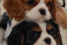Kutyusok... / Az ember legjobb barátja a kutya... ezt csak az nem hiszi el, akinek még sosem volt kutyája...