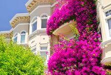 Virágos balkonok / A házakat szépítő balkonokról és a virágokról