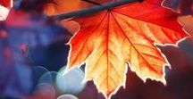 Az ősz színei / Minden szépségről, amit az Ősz ad nekünk...