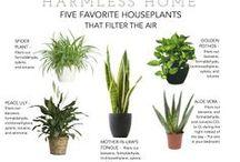 piante - plants