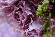 *Flowers & Greens 2 / by Lys gardenia