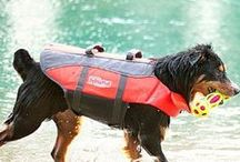Summer Fun | Dog-Friendly Events and Ideas / Splash up some fun this summer with help from Outward Hound. From water toys to life jackets, we have everything you need to beat the dog days of summer!