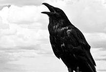 Crow Area