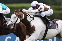 Racehorses!!! / Some of my favorite racers are on here! / by Haley (Hutcherson) McCullah
