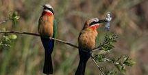 Ptaki Afryki / #birdsofafrica #africanbirds #birding #birds #ptaki #africannature