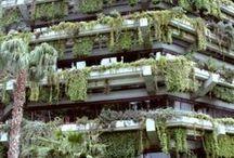 Ogród w pojemnikach / garden in containers...