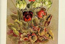 Owadożerne / carnivorous plants