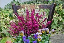 Дача: Цветы и сад