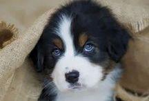 Animal Love / Always puppies, always cuties