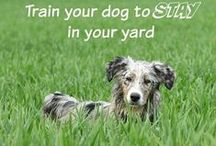 Dog Training / Tips, Tricks, Information, Info-graphics, and #Products to help aid you in training your dog!