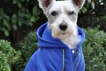 Doggy Fashion / #Clothes and #DIY Patterns for Outfits and Accessories for your four legged #BFF!