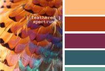 Palety kolorystyczne / Szukacie inspiracji, w jakich kolorach urządzić mieszkanie? A może nie wiecie, jakie dodatki będą pasować do mebli lub odwrotnie? Sprawdźcie, jakie kolory będą strzałem w dziesiątkę.
