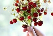 plody ze zahrady