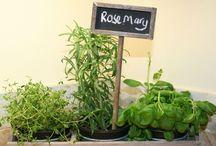 Greeny / Garden life