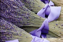 Lavender / Beautiful flower, gorgeous fragrance, luv the colour and my favourite flower.