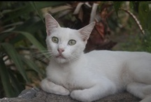 Cats / sweet kitty