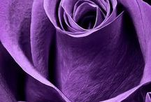 Purple, Lilac, Violet - all shades of purple / Colours