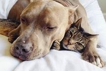 cat and dog - better together?