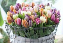 Spring/Easter / Stockton, IL and Galena, IL