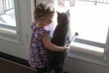 Pets: KITTIES AND CATS!!! Ü / My Best Friends! / by Anna Mac