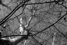 """Spleen / """"Quando come un coperchio, il cielo basso e greve schiaccia l'anima che geme nel suo eterno tedio, e stringendo in un unico cerchio l'orizzonte fa del dì una tristezza più nera della notte, [...] quando le immense linee della pioggia sembrano inferriate di una vasta prigione e muto, ripugnante un popolo di ragni dentro i nostri cervelli dispone le sue reti."""" [Charles Baudelaire, Spleen di Parigi]"""