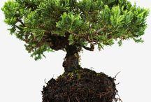 Konjac Spons / De konjac sponge! Een volledig biologisch afbreekbare spons vervaardigd uit konjac plant vezel. Konjac is ook wel bekend als Konnyaku, een aardappelachtige vaste plant die van origine in Azië groeit. Konjac staat bekend om zijn verzorgende en verzachtende eigenschappen. Dat maakt het dus uiterst geschikt als huidverzorging product oftewel de konjac spons! We love it!