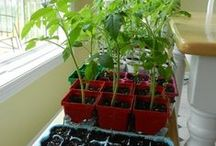 Vegetable Gardens, How To / Great help and information regarding growing vegetables in your own garden; great tips to help you be successful!