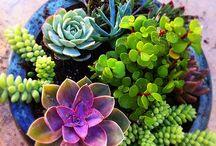 Cactus & Succulents / by BabyDoe Aless
