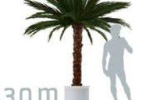 Palmen, Palmwedel, konserviert, kaufen oder mieten / Palmengewächse, Zimmerpalmen, Große Palmen, Dekopalmen, echte Palmwedel