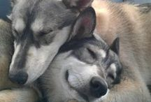 Furry Friends / Animals <3