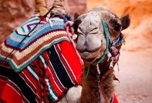 Camel Rides / On my 'to do' list... Because camels are the fkn best!