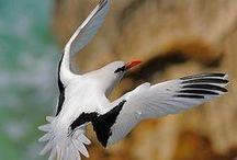 Mauritius fauna&flora / Besides white beaches and blue lagoongs, Mauritius has an important fauna and flora.