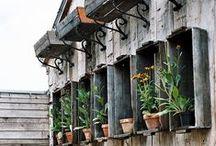kruiden, tuin en kruidentuin