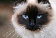 Feline / Cats! Duh.