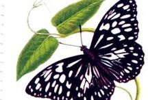 Butterflies & Moths & Art (3) / by Michaela X