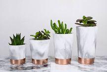 •Plants• / plants