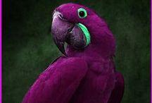 The Color Purple / Nicht nur im Kino ein Erfolg - lila Dessous sind erotisch, feminin und voll im Trend