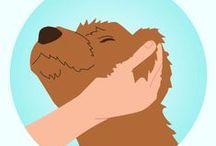 Various Doggy Info  / Various Doggy Info :-)