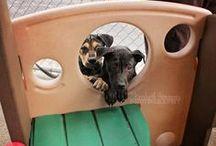 Pets at Play