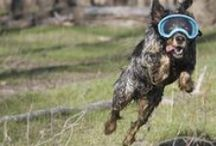 Pet Gear / Travel and Safety equipment and accessories for pets.