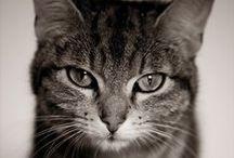 mininos & co / Gatos y gatitos sobre todo, aunque todo tipo de animales son bienvenidos