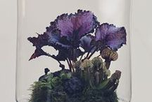flowers and plants and moss, oh my / by Megan Cutler