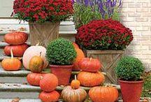 Fall & Halloweeen Decorations
